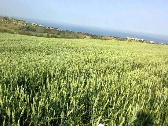 Tekirdag Barbaros Farm For Sale